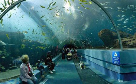 Aquarium Development Consultants Leisure Business